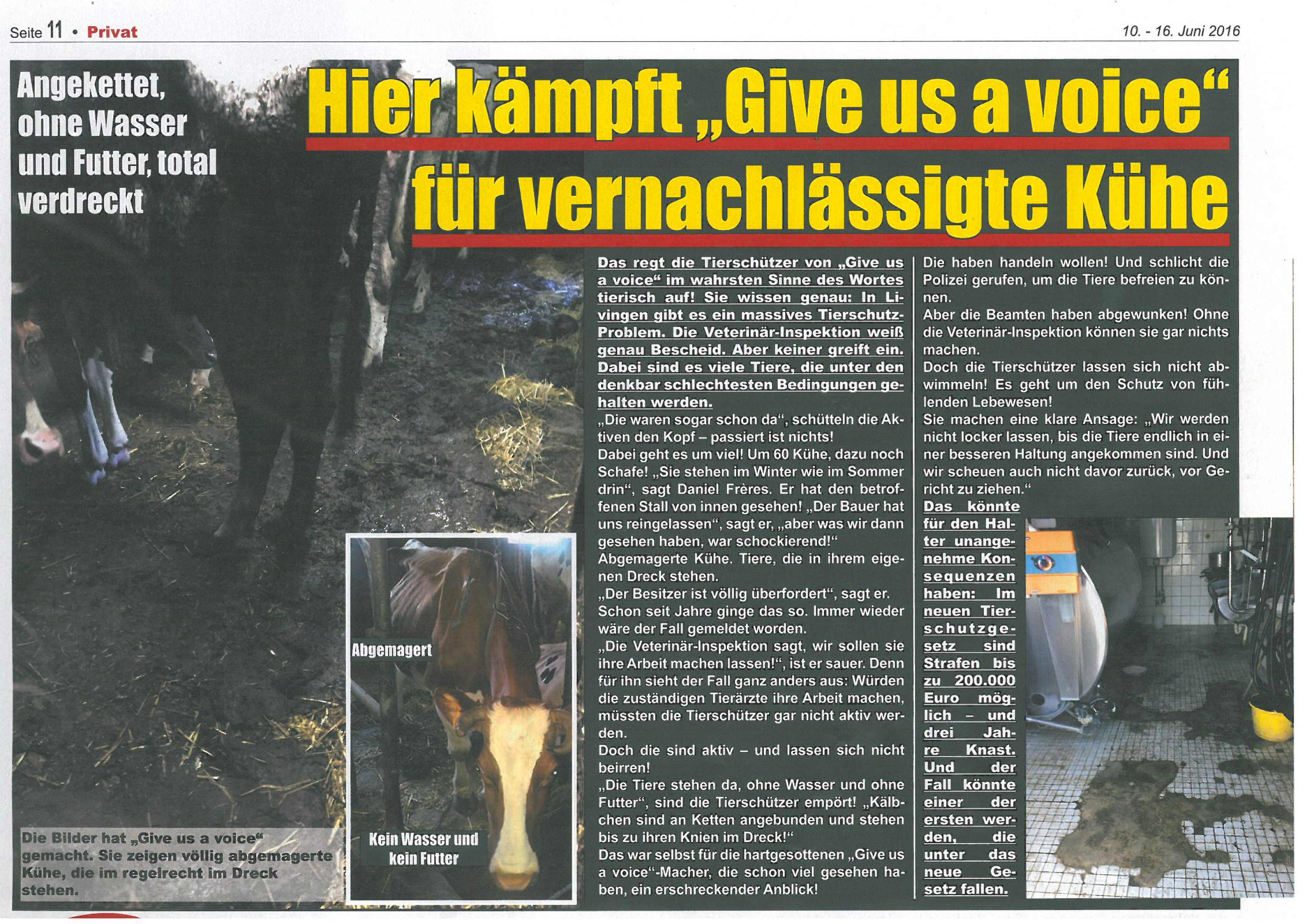 16-06-10 Privat article about cows in barn