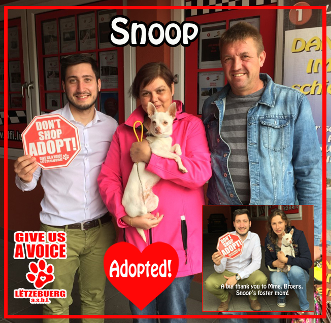 Adopted! copy