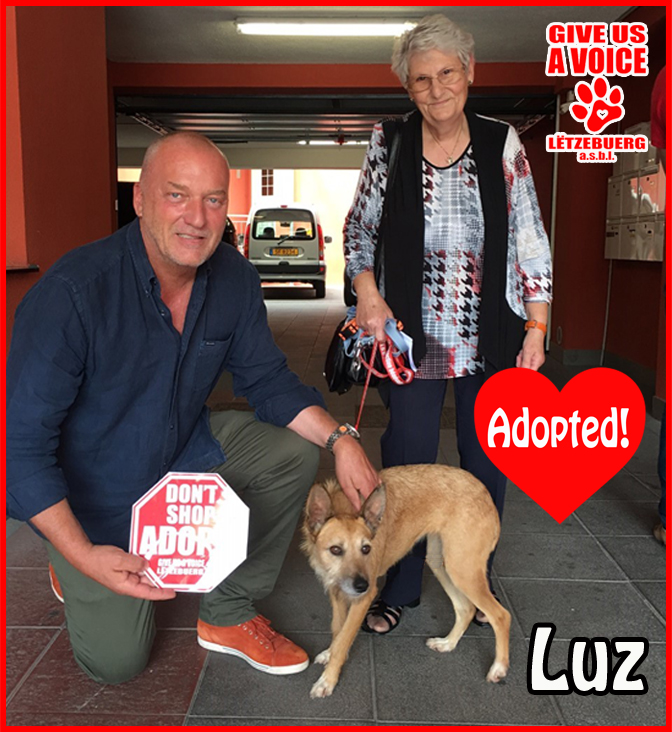 Luz adopted copy
