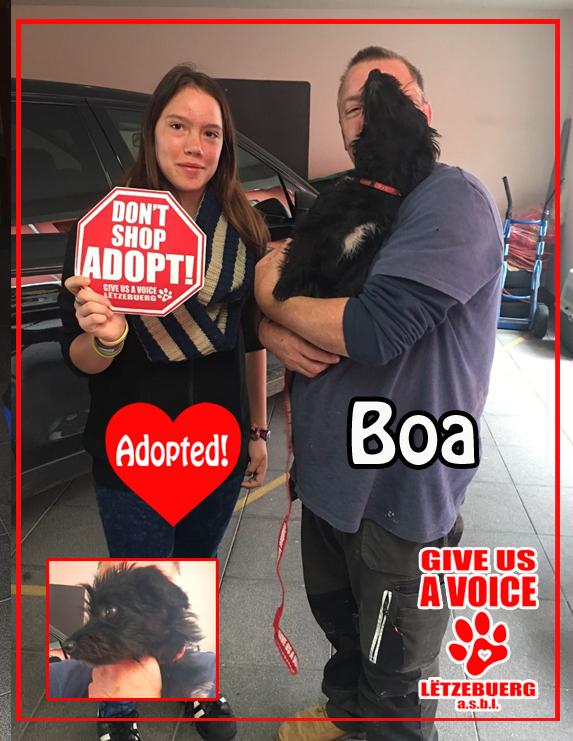Boa adopted! copy