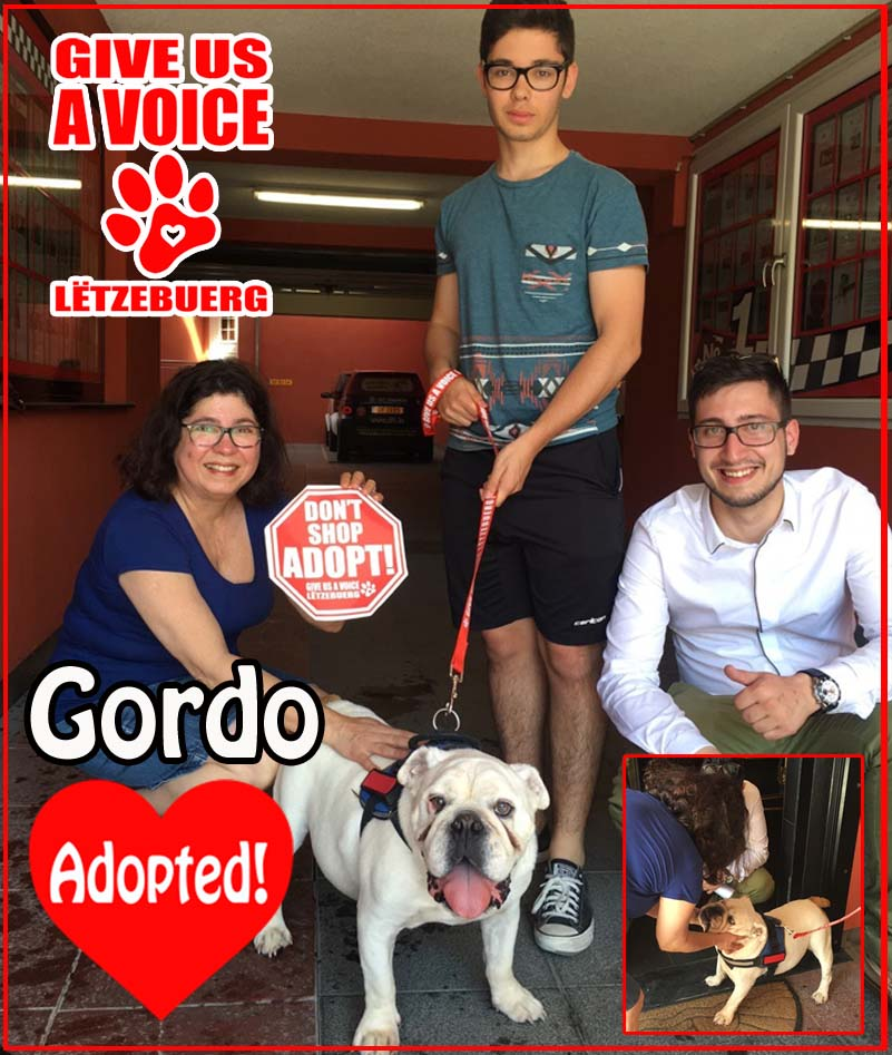 Gordo Adopted! copy