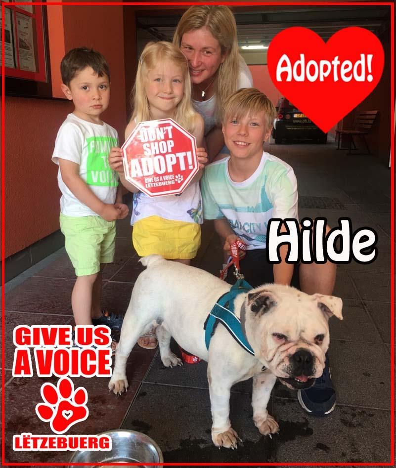 Hilde Adopted! copy