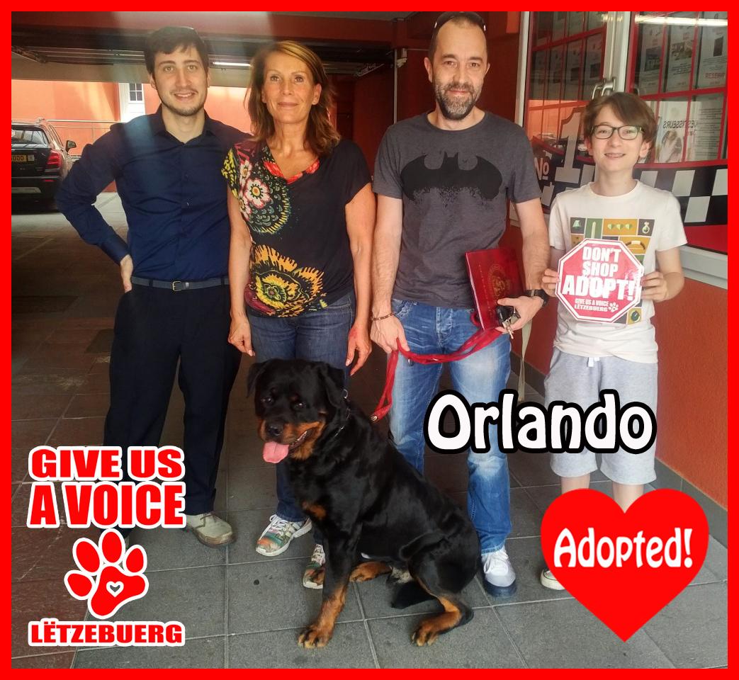 Orlando Adopted!