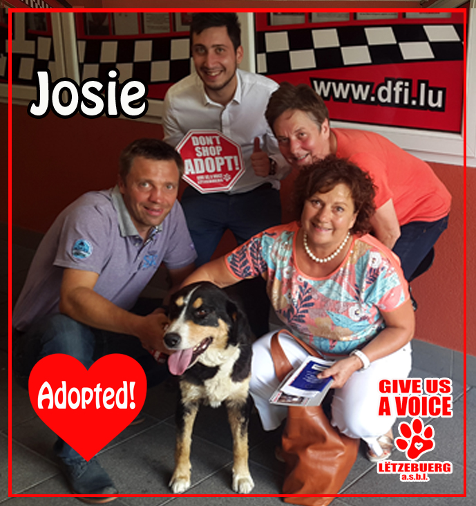 Josie Adopted! copy