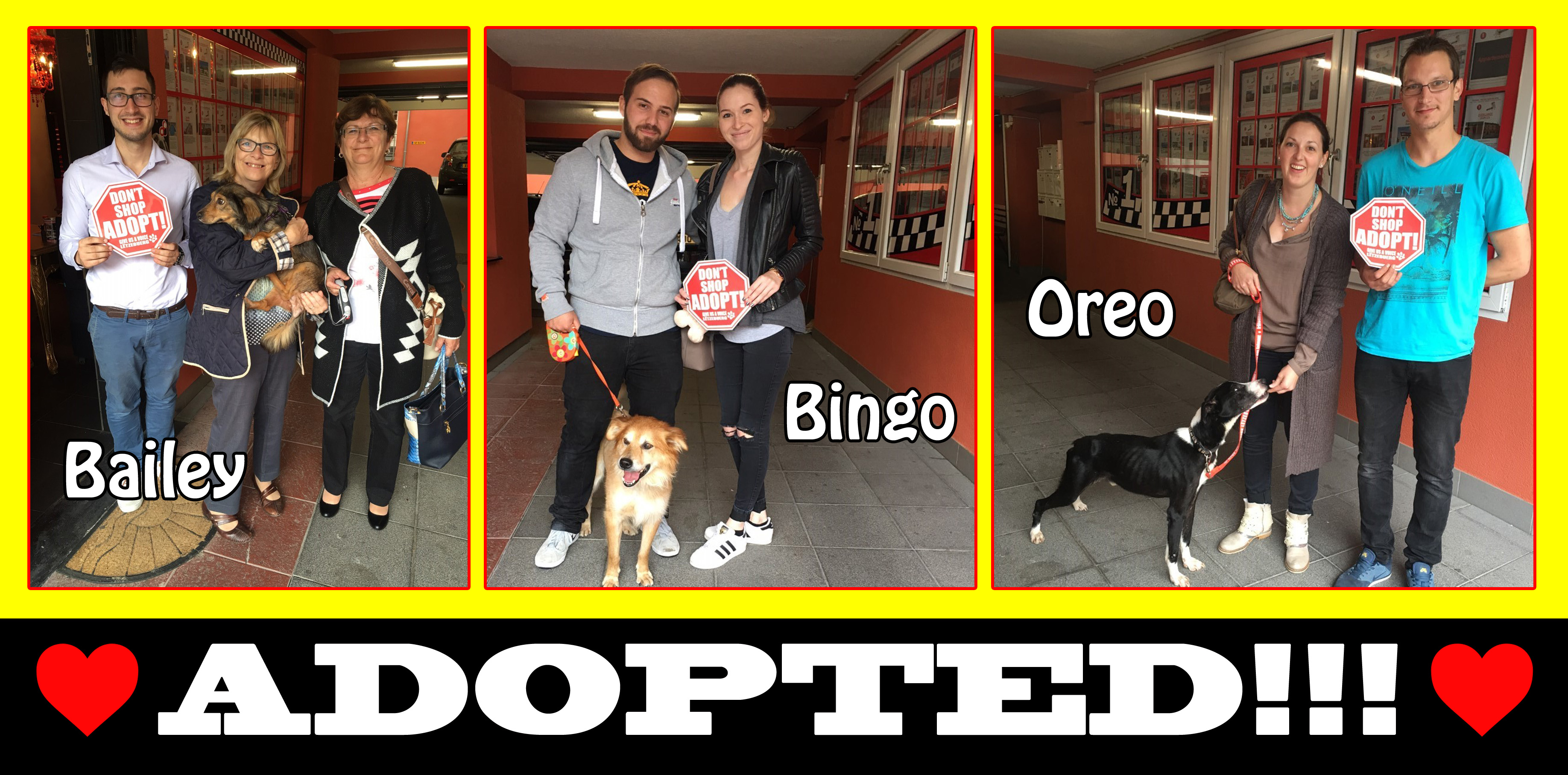 bailey-bingo-and-oreo-adopted-copy