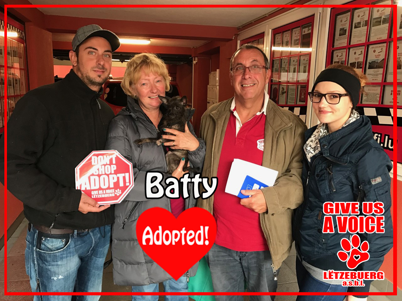 batty-adopted-copy