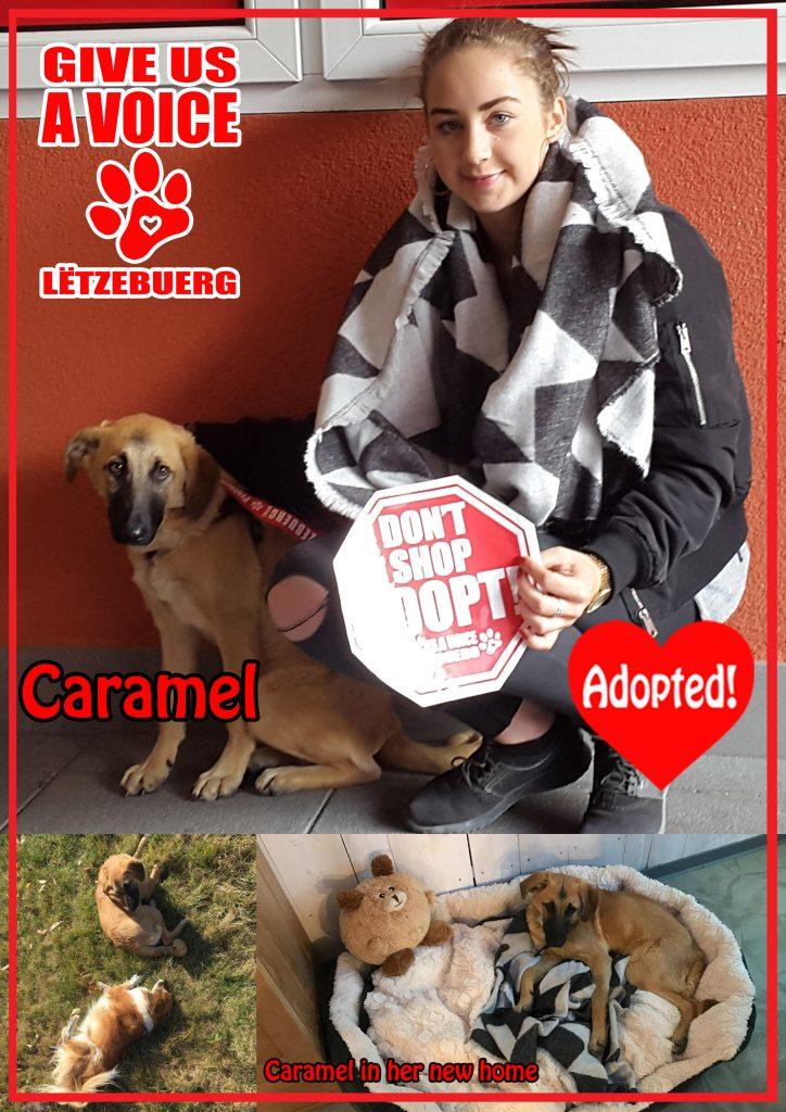 caramel-adopted-copy