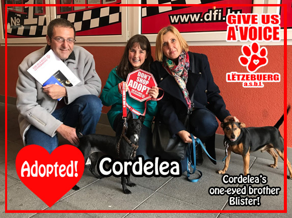 cordelea-adopted-copy