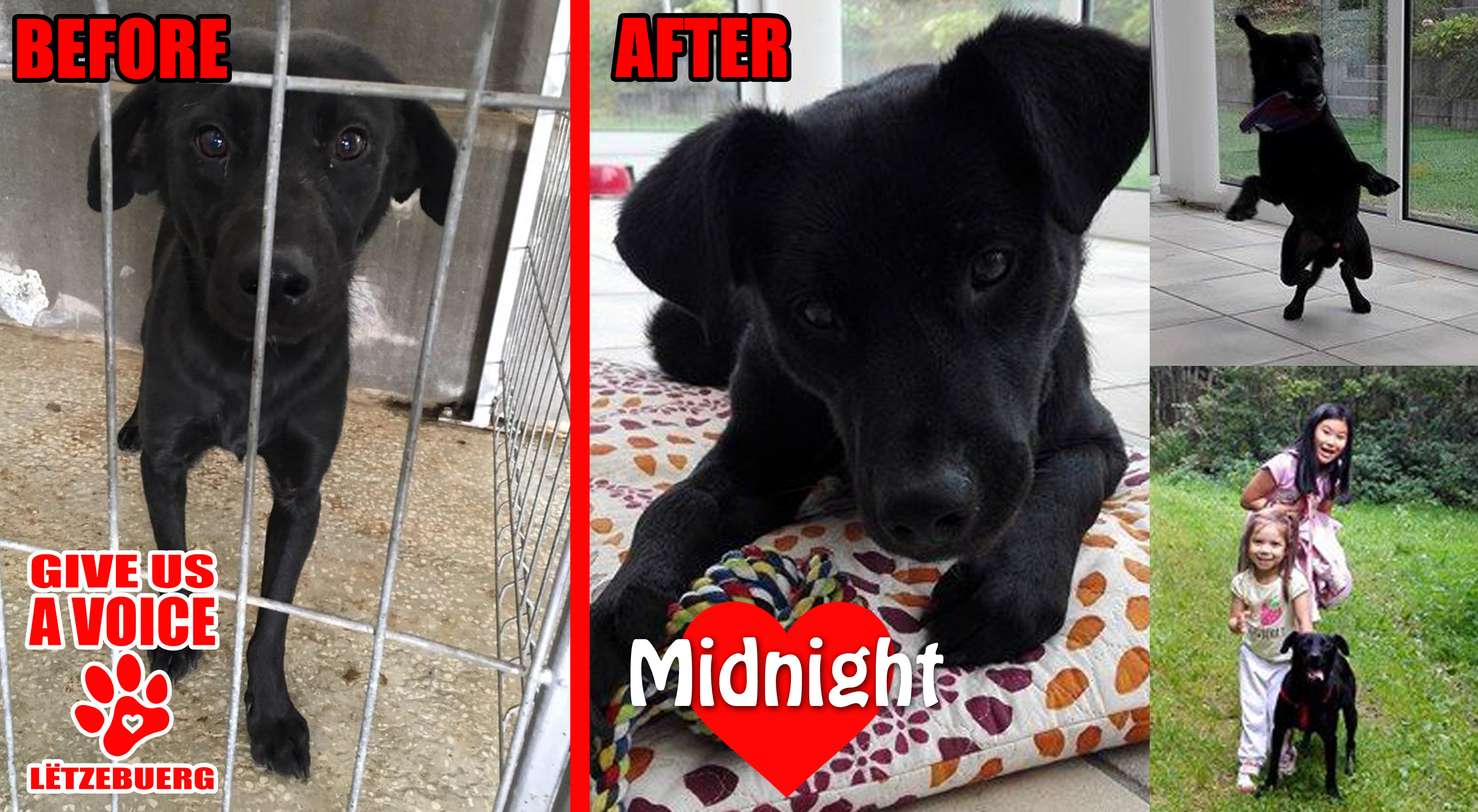 midnight-before-and-after-copy